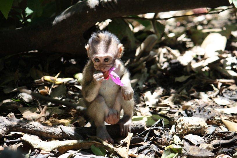 Baby_Monkey_6889_by_fa_stock
